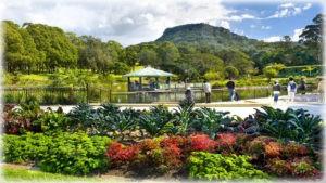 ботанический сад Вуллонгонга
