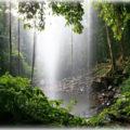 Дождевые леса Тасмании