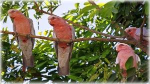 Флора и фауна парка Какаду