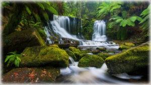 леса восточного побережья Австралии